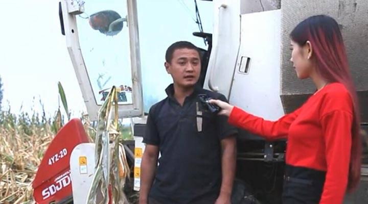 莱州金达威玉明3号玉米收获机现场作业视频