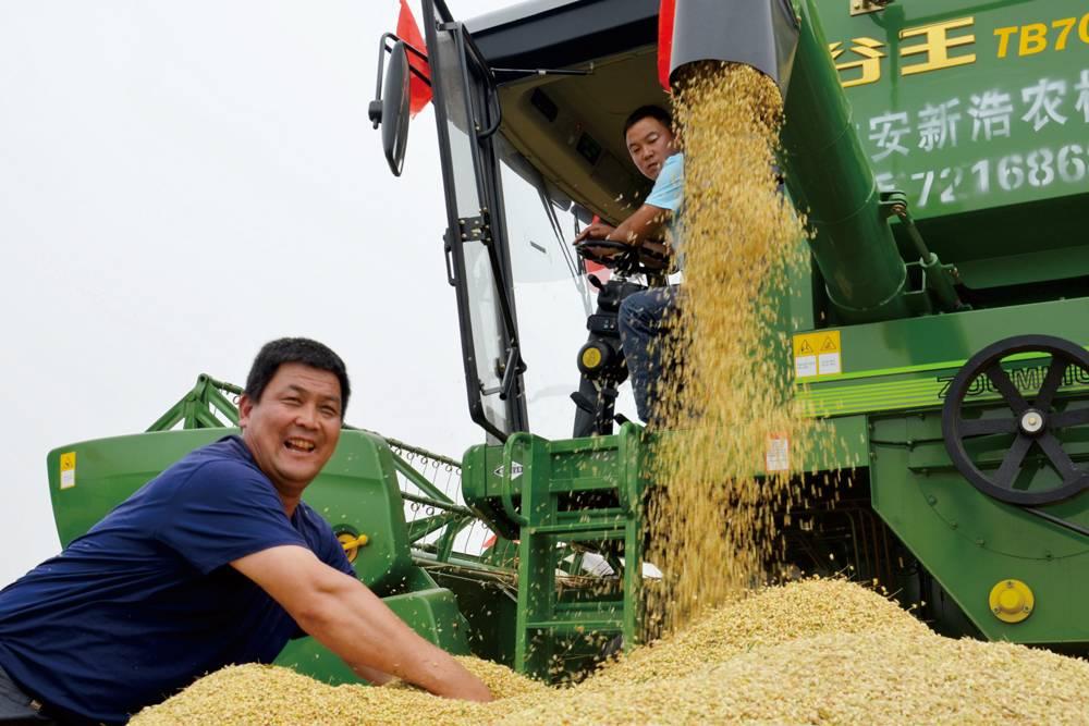 收获金粒粒:在河北开镰当天,当地的农户喜获丰收