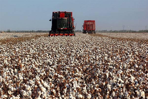 物联网助推棉花生产提质增效