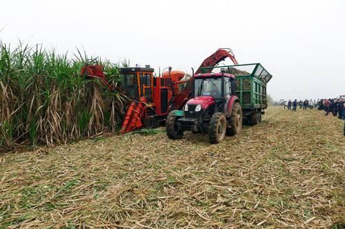 广西甘蔗生产机械化步入快车道