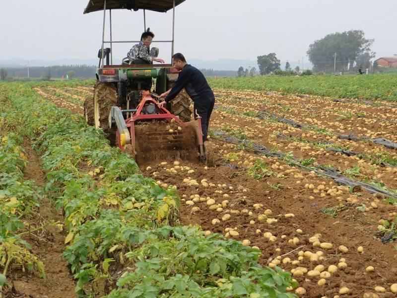 吉林省申报2017年马铃薯生产作业补贴需求