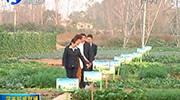 河南:种植业农险迎来升级版