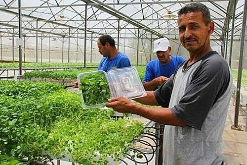 以色列农业何以闻名?三大农机技术是关键