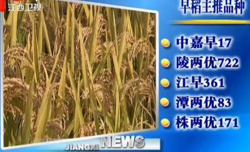 江西发布2017年水稻主推品种