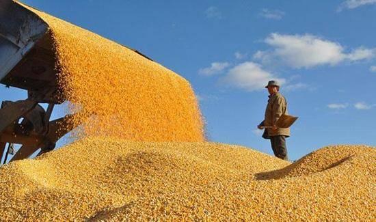 粮农组织称:全球粮食系统亟需改造