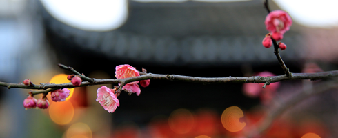 春来花开,绽放正当时