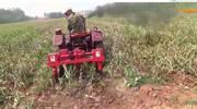 大蒜收获机作业视频