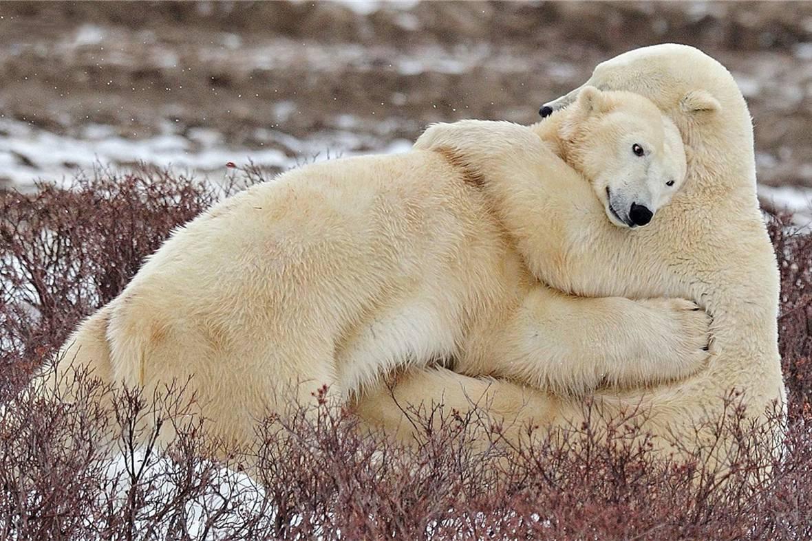 呆萌a标志的标志表情腾讯qq动物图片图片