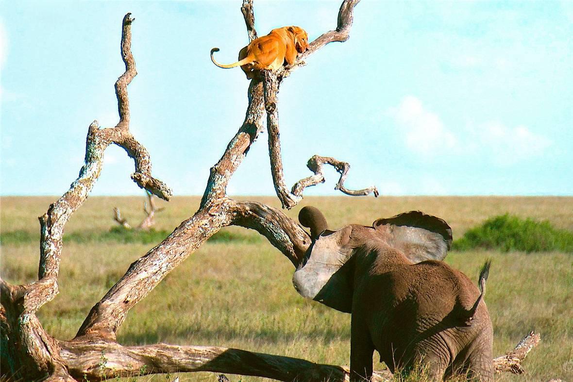 大象简笔画步骤站着