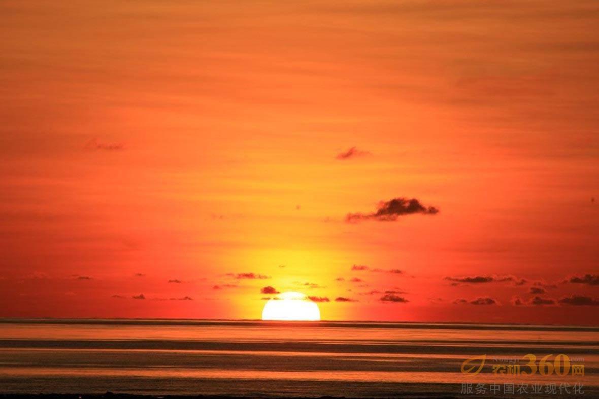 (10/12)海豚跃出水面. (11/12)海鸥飞翔在南沙上空.