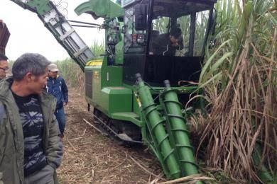 """对于坡度大、地况差的蔗田,""""谷王""""AS60甘蔗机同样可以应付自如。"""