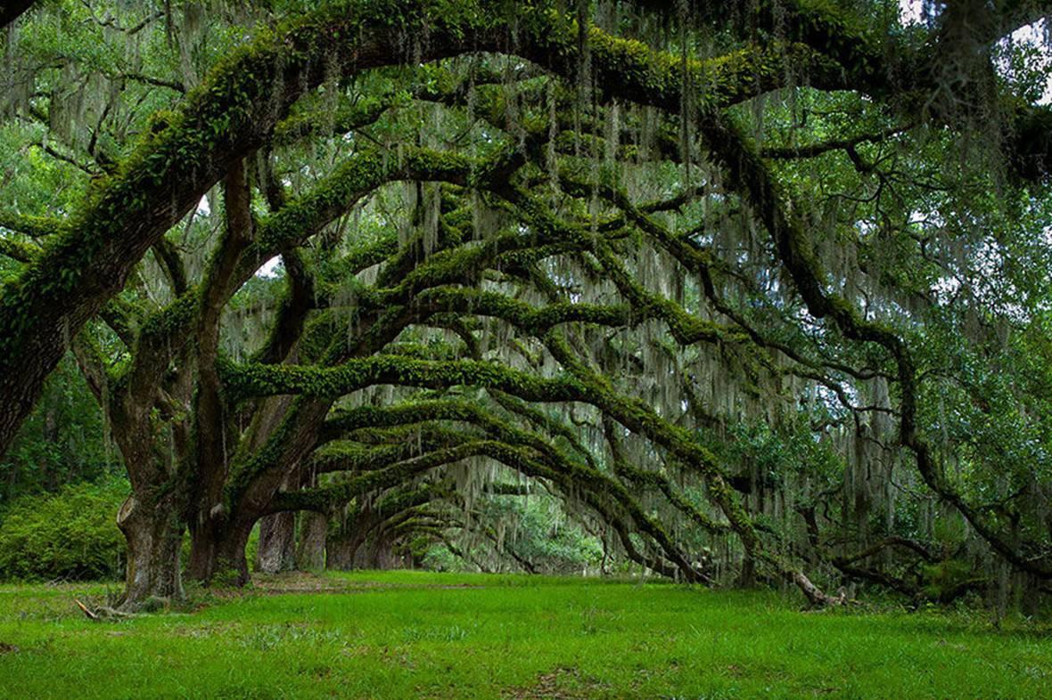 沉醉之旅 看世界各地美丽的树