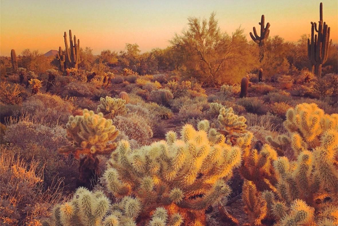 这幅沙漠照片,将日落时分温暖的红色和橙色光线发挥到极致.