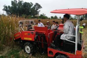 """""""沭河·谷丰""""4YZP-2Q玉米收获机作业现场。"""