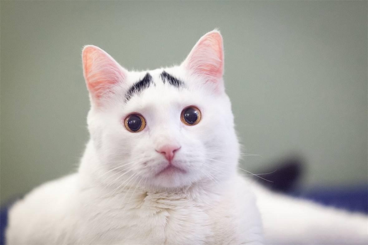 动态图可爱的猫咪