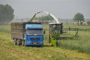 同马力段目前是国内工作效率较高的机具.每小时青贮玉米12-15亩。图为美迪9QZ系列自走式青饲料收获机作业现场。