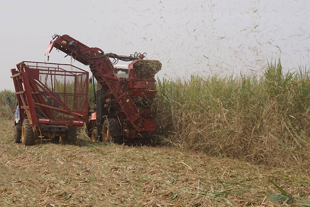 首台国产切断式全液压传动双行甘蔗收割机正在作业。图为风机把切碎的蔗叶抽出分离。