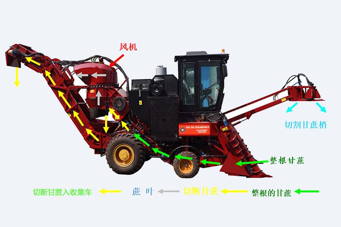 """中首信(贵州)现代农业装备有限公司于2014年针对1.2米种植行距,宽窄行,90厘米以上双行种植等不同情况一举生产了六个型号的""""甘宝牌""""甘蔗联合收割机,涵盖整杆式和切断式两大系列。图为切断式甘蔗收割机全景图。"""