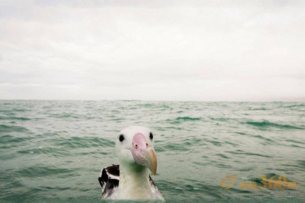 奇趣野生动物摄影奖入围作品