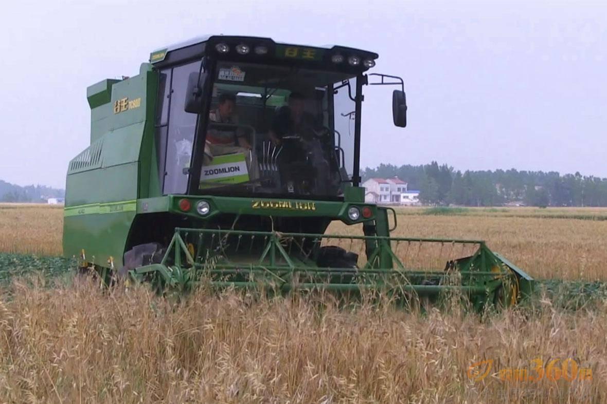 谷王TC80小麦机在湖北抢收大麦。