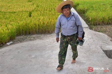 水稻育种专家:每天下田七八小时