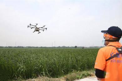 飞洒作业 科技助农