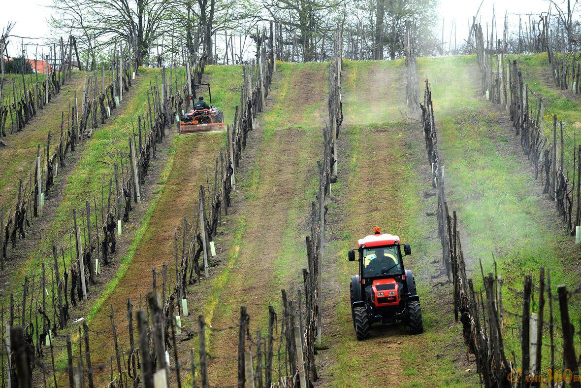 高登尼拖拉机在葡萄农场作业