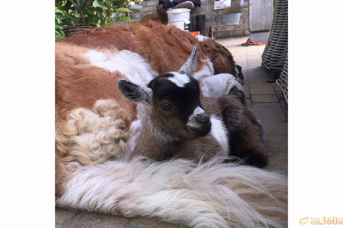 动物间暖心图片