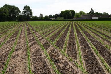 精量播种格兰集团商标出苗后的图案