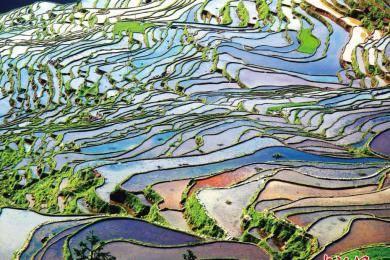 贵州梯田四季风景美如画