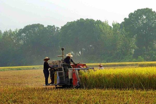 2015年水稻收割机市场分析