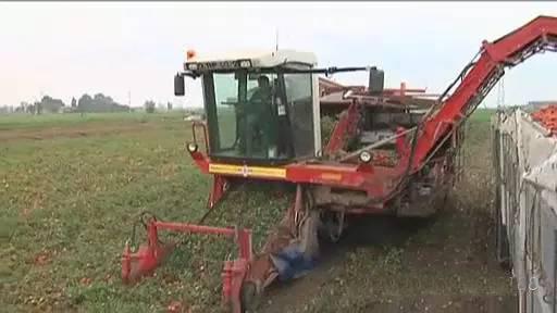 国外最新果蔬收割机,果叶自动分离装车