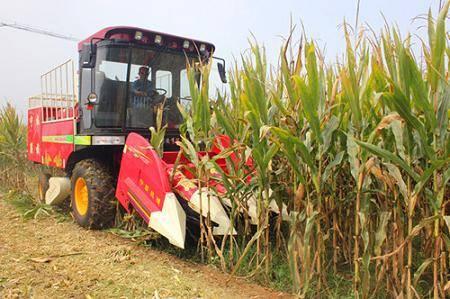 玉米收获.jpg