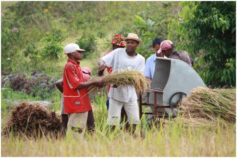 中国技术,助力非洲农业现代化
