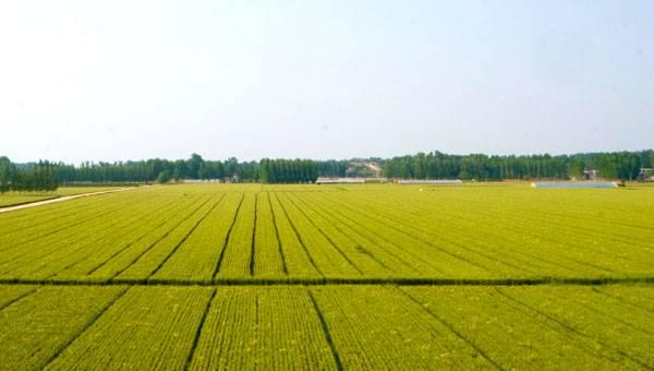 高标准农田.jpg