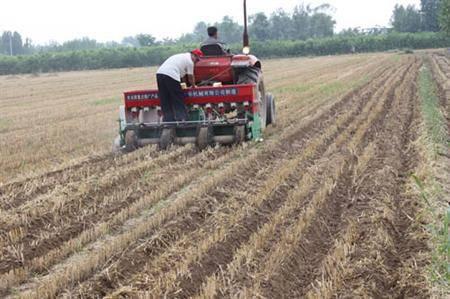 夏玉米在播种时应当注意哪些问题?