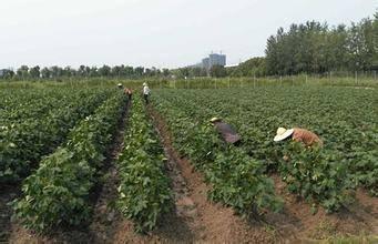 2016年长江流域棉区灾后生产技术指导意见