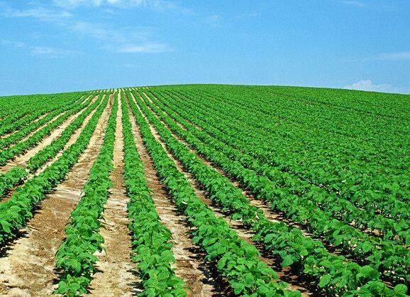 结构调整布局现代大农业