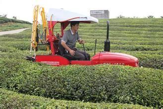 茶园生产全程机械化.jpg