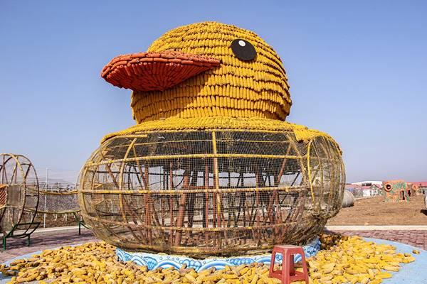 辽宁农民用6000穗玉米拼出大黄鸭 迎接冬天1.jpg