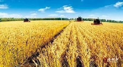我国农业结构调整成效显著