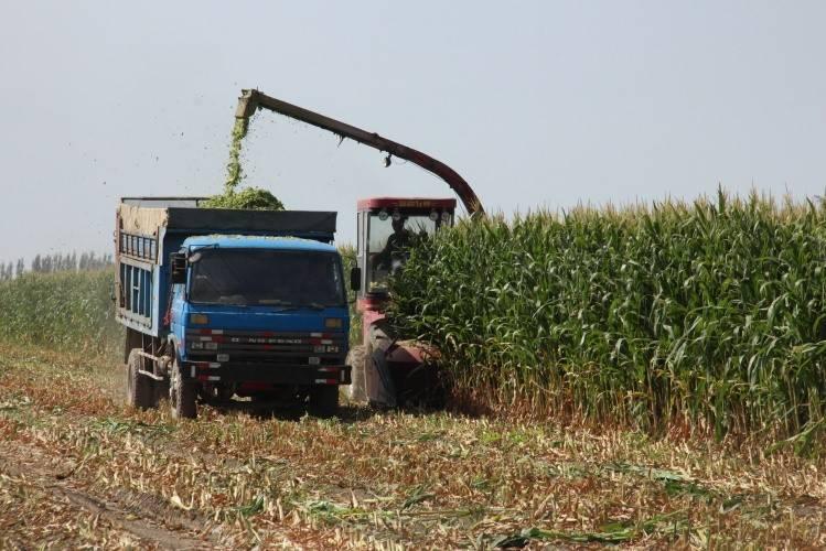 中国今年调减玉米种植面积3000万亩
