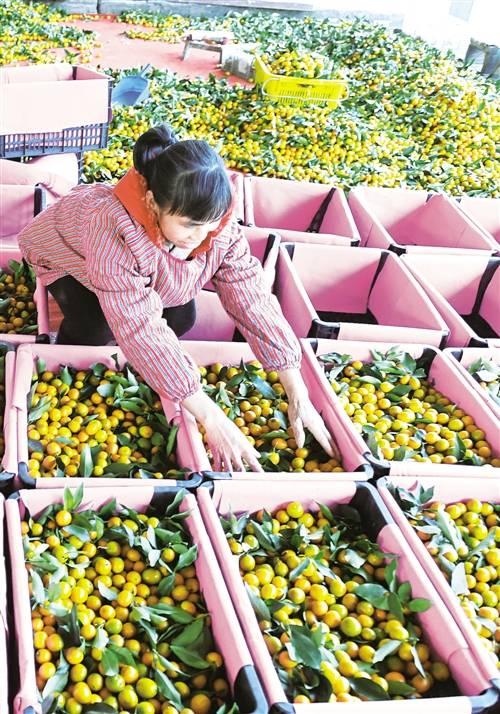 农业迎来新变化 农村增添新动能