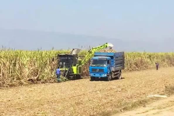 中联重科甘蔗机在大面积作业中表现优秀