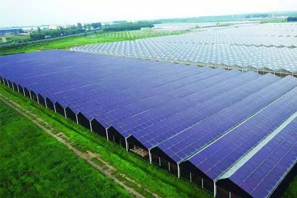 专家建议: 发展光伏农业助力生态转型