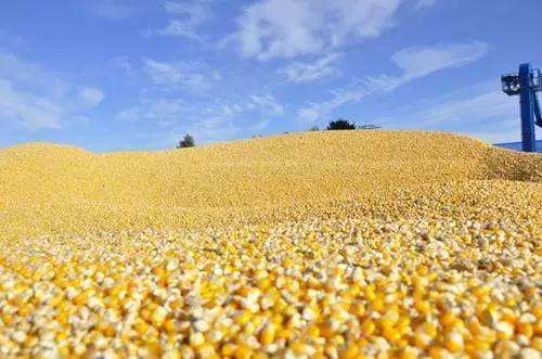 深刻认识玉米收储制度改革的重大意义
