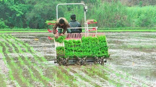早稻机械插秧环节技术指导