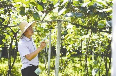 农业职业经理人:不当老板当农民 年入百万仍学习