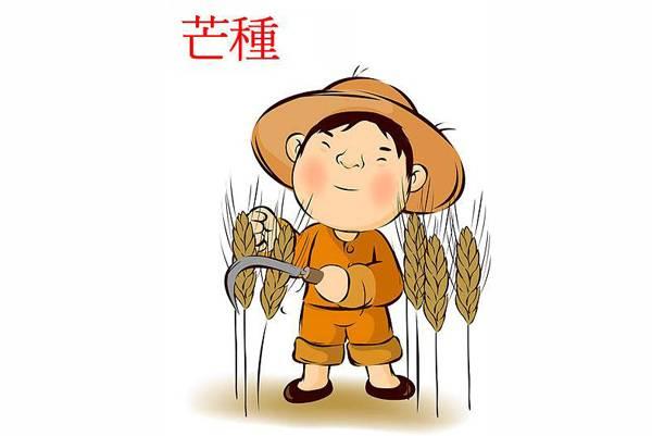 农民微商魏宝玉巧心思卖米